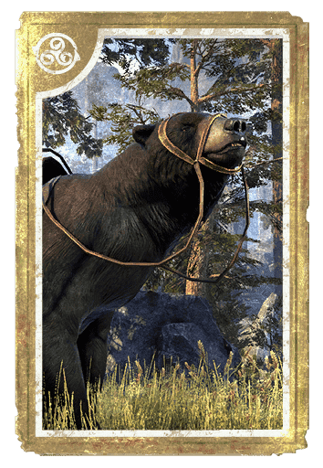 Black Bear card
