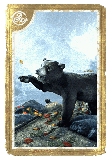 Black Bear Cub card