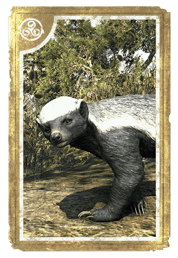 Colovian Badger card