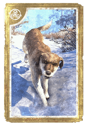 Winterhold Wolfhound card