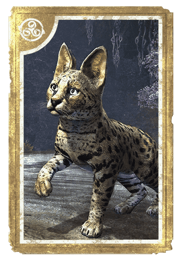 Senche-Serval Kitten card